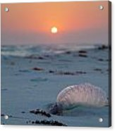 Peaceful Man Of War Acrylic Print by Charles Warren