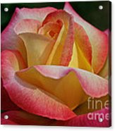 Peaceful Petals Acrylic Print