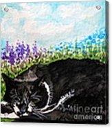 Peaceful Slumber Acrylic Print