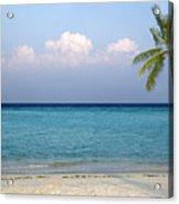 Peaceful Tropical Beach With One Palm Tree Acrylic Print