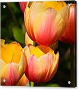 Peachy Tulips Acrylic Print