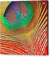 Peacock Feather 2 Acrylic Print