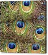 Peacock Feather Eyes Acrylic Print