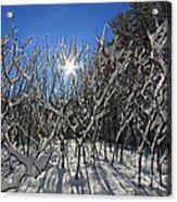 Peaking Sun Acrylic Print