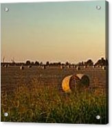 Peanut Field Bales At Dawn 1 Acrylic Print