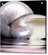 Pearly Nautilus Acrylic Print