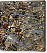 Pebbles And Shells By The Sea Shore Acrylic Print