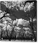 Pecan Trees Acrylic Print