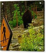 Pedestrian Crossing My Big Bear Booty Acrylic Print