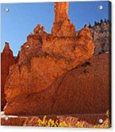 Peek A Boo Trail 2 Acrylic Print