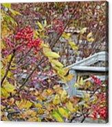 Peeking Through The Berries Acrylic Print