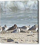 Peeps At The Beach #2 Acrylic Print