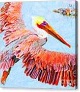 Pelican Flying Back To The Docks Acrylic Print
