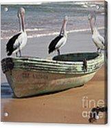 Pelican Heaven Acrylic Print