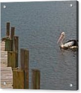 Pelican In The Water Next To A Timber Landing Pier Acrylic Print