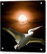 Pelican Moon Acrylic Print