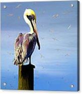 Pelican Perch Acrylic Print by Suni Roveto