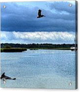 Pelican Porpoise And Pirate Ship Acrylic Print