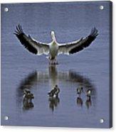 Pelican Protector - Florida Wildlife Scene Acrylic Print