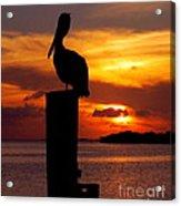 Pelican Sundown Acrylic Print by Karen Wiles