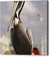 Pelican Visiting City Marina Acrylic Print