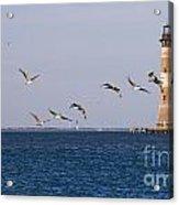 Pelicans And Morris Island Light 1 Acrylic Print