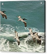 Pelicans In Flight Over Surf Acrylic Print by Gregory Scott