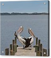 Pelicans On A Timber Landing Pier Mooring Acrylic Print