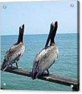 Pelicans On The Pier Acrylic Print