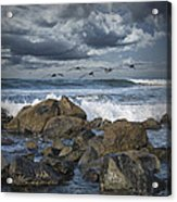 Pelicans Over The Surf On Coronado Acrylic Print