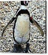 Penguin 14 Acrylic Print