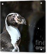 Penguin Splash Acrylic Print