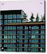 Penthouse Pines Acrylic Print