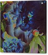Peony 1 Acrylic Print
