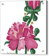 Peony In Pink Acrylic Print by Anne Norskog