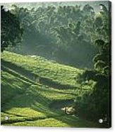 People Walking Through Lujeri Tea Acrylic Print