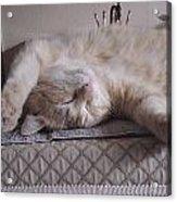 Percy Cat Sleep Stylist Acrylic Print