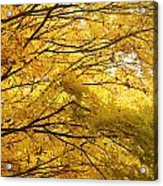 Perfect Autumn Acrylic Print