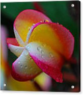 Perfect Colour Acrylic Print