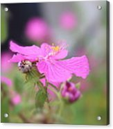 Perfect Pink Acrylic Print