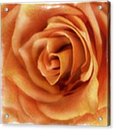 Perfection In Peach Acrylic Print