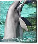 Performing Dolphin Acrylic Print