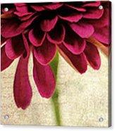 Petales De Fleurs Acrylic Print