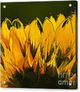 Petales De Soleil - A41b Acrylic Print by Variance Collections