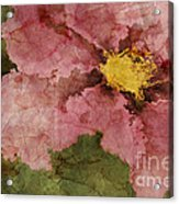 Petaline - Ar01bt05 Acrylic Print by Variance Collections