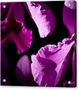 Petals Galore Acrylic Print