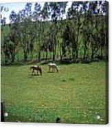 Petaluma Pasture Acrylic Print