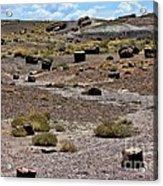 Petrified Forest National Park 2 Acrylic Print