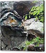 Petrified Prehistoric Monster In Arkansas Acrylic Print by Douglas Barnett