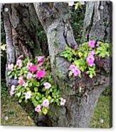 Petunia Tree Acrylic Print